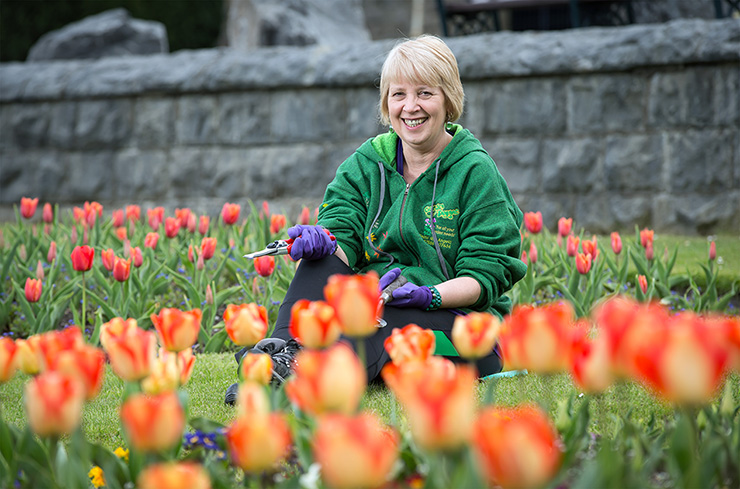 A woman with secateurs sitting among tulips